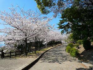 神戸市 桜 名所 穴場  花見 スポット