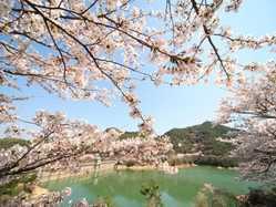 大阪の桜の名所や穴場は?2018年の花見ができるスポットをご紹介!