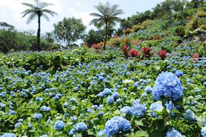 5月 沖縄 旅行 気温 4