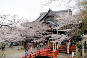 和歌山県 桜 穴場 名所 2016 花見 スポット