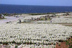 4月 沖縄 旅行 気温 服装 6