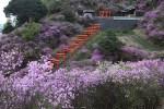 藤やつつじの花は関西の名所へ!人気のスポットをご紹介!
