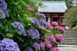 紫陽花(あじさい)の名所スポットは?関西のおすすめをご紹介!