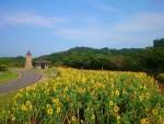 ひまわり畑の関西の名所は?イングランドの丘や万博公園が人気?