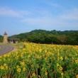 ひまわり畑 関西 名所 人気 11