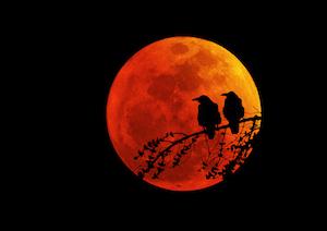 赤い月は地震の予兆?月が赤い理由やブラッドムーンについて、鑑賞グッズは?