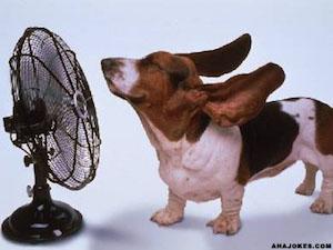 犬 熱中症 対策 症状 おすすめ グッズ