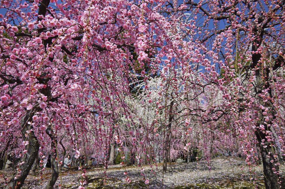 2月は京都府へ旅行!気温や服装、観光におすすめなスポットは?