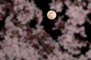意味 は 綺麗 で しょう 明日 ね の 月