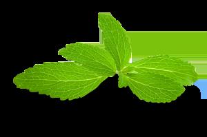 stevia-plant-leaves