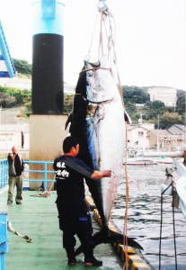 マグロ(400キロの巨大マグロ)