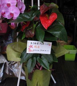 クロコさんより開店祝いのお花を頂きました