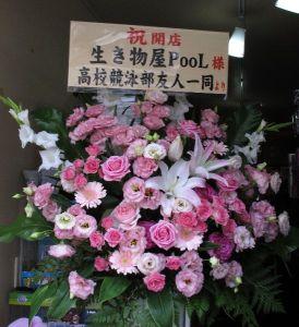 友人たちより開店祝いのお花を頂きました