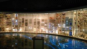 国立科学博物館~地球館