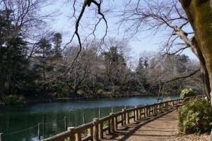 井の頭池の散策ルート