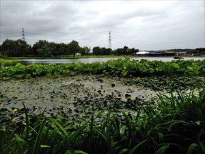 大池を眺める