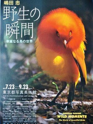 東京都写真美術館「野生の瞬間」展 バリアフリー情報