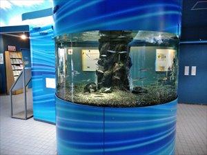 さいたま水族館のバリアフリー状況