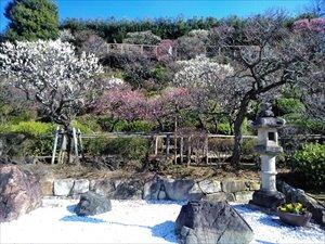 東京の梅林 池上梅園 車椅子観梅ガイド バリアフリー情報