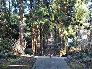 茨城県の一本桜 枝垂れ桜の古木がある 城里町 小松寺