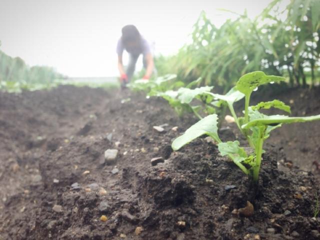 障がい者と仕事 農福連携事業 表彰審査基準からみる成果目標