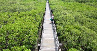 新豐景點推薦 新竹紅樹林隧道 宛若龍貓隧道 網紅IG打卡熱點 一日輕旅行