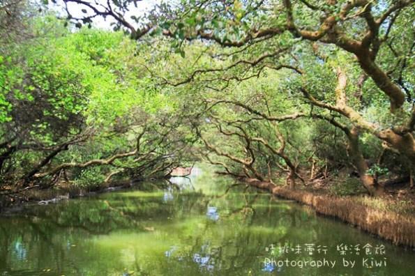 台南景點 安南四草紅樹林綠色隧道樹林倒映如亞馬遜河流域(親子遊/台南一日遊)