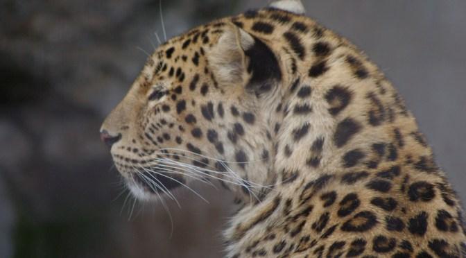 旭川市営の旭山動物園の回り方