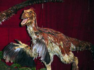 Feathered Deinonychus antirrhopus model at the Royal Ontario Museum. Credit: Aaron Gustafson Copyright: Wikimedia Commons