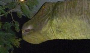 Sauropod eating