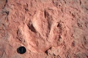 By Dave Higgins (Flickr: Dinosaur Tracks, Tuba City, AZ) [CC BY 2.0 (http://creativecommons.org/licenses/by/2.0)], via Wikimedia Commons