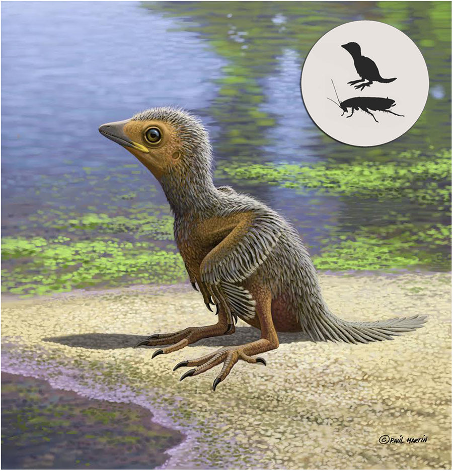 This Week in Dinosaur News: Birds and Evolution, Archaeopteryx and Flight, David Attenborough and VR, Museums, and More
