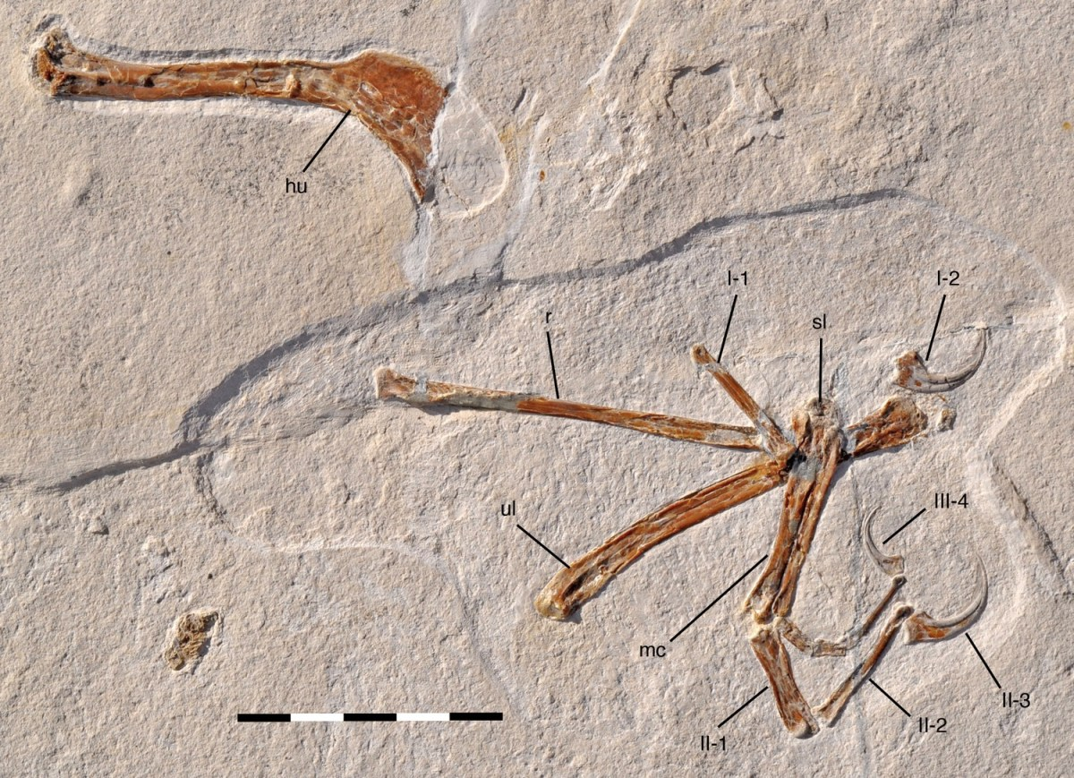 This Week in Dinosaur News: The new largest bird of the Jurassic, Alcmonavis