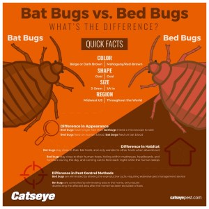 Are There Any Natural Ways To Get Rid Of Bed Bugs