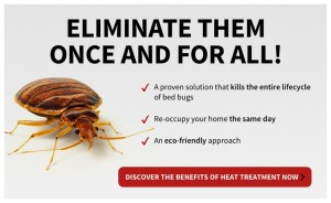 How Do I Get Rid Of Bed Bugs By Myself