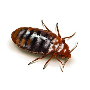 How To Keep Bed Bugs Off Your Body 401