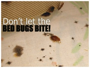 What To Do After A Bed Bug Treatment