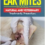 Ear Mite Treatment For Dogs Natural
