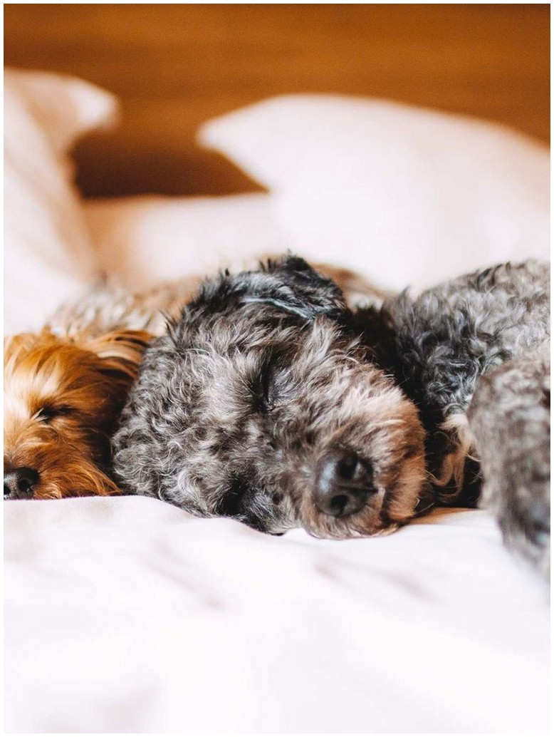 How To Get Rid Of Mites On Dogs Bedding