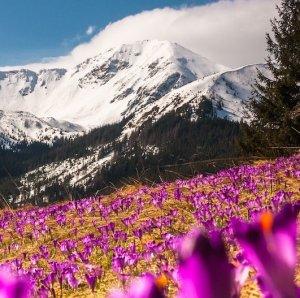 alpine flowers mobile image