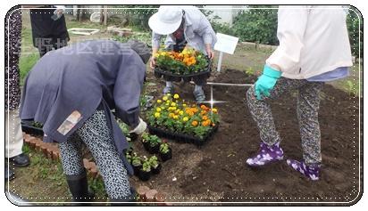 花壇植え替え3
