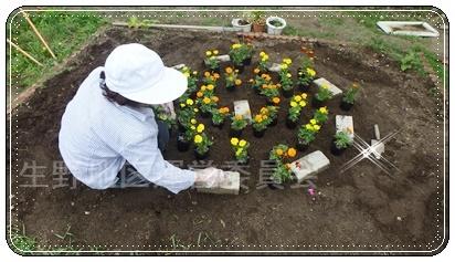 花壇植え替え5