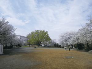 三田第4公園桜