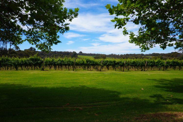 Australie-Road-Trip-Margaret-River-Brookland-Vallet-Vinyard-Wine-Tasting 06.53.25