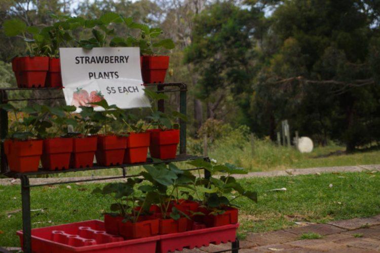Australie-Road-Trip-Margeret-River-Berry-Farm 08.46.01
