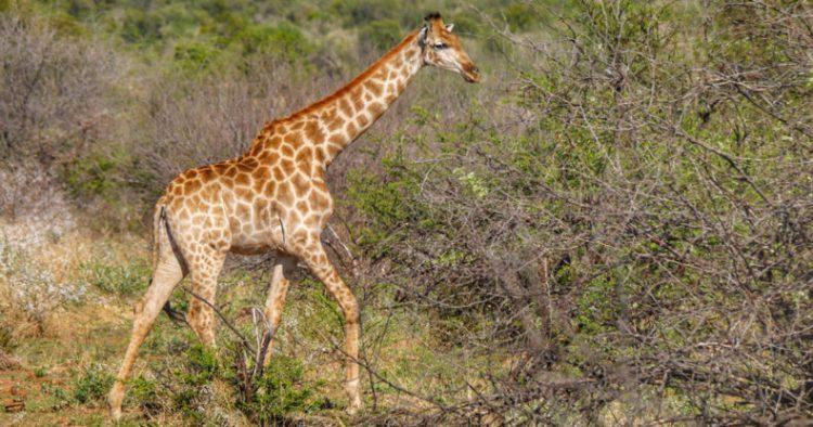 safari-afrika-fb