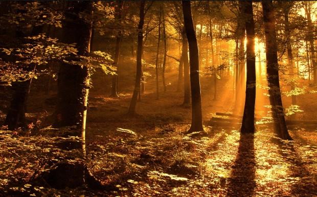 Zon tussen de bomen door