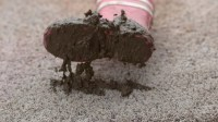 Getting Mud Out of Your Carpet! - | Green T Carpet ...