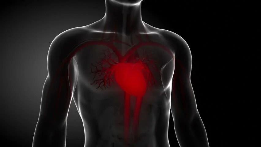 Internal Heart Loop Monitor