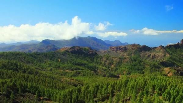 guatemala forest landscape stock